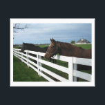 "Kentucky Horse Country Canvas Print<br><div class=""desc"">Kentucky Horse Country</div>"