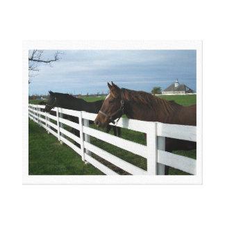 Kentucky Horse Country Canvas Print