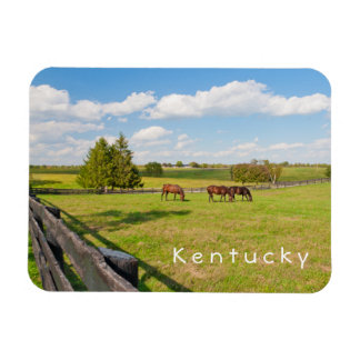 Kentucky, horses at horse farm Photo Magnet