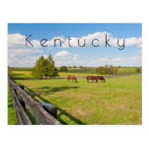 Kentucky Postcard, horses at horse farm Postcard