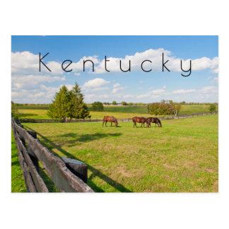 Kentucky Postcard, horses at horse farm Postcard
