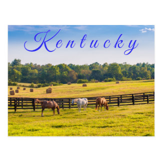Kentucky Postcard. Horses at horse farm. Postcard