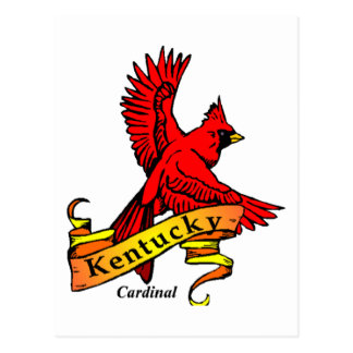 Kentucky State Bird Postcard