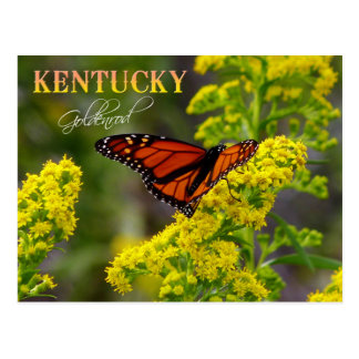 Kentucky State Flower: Goldenrod Postcard