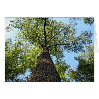 Kentucky Tree Cards