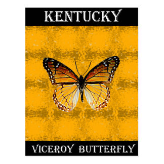 Kentucky Viceroy Butterfly Postcard