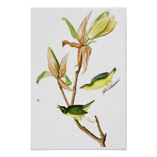 Kentucky Warbler John James Audubon Birds America Poster