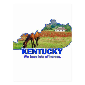 Kentucky, We Have Lots of Horses Postcard