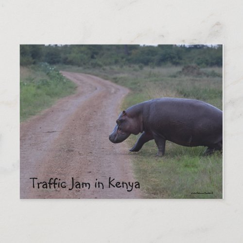 Kenya Africa Traffic Jam Hippo Postcard