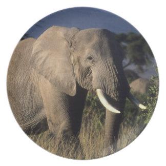 Kenya: Amboseli, male African elephant Melamine Plate