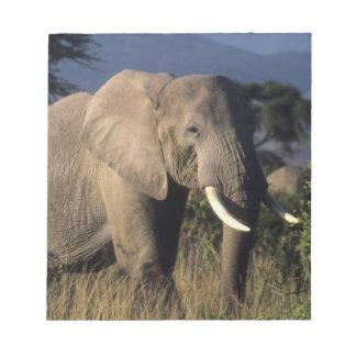 Kenya: Amboseli, male African elephant Notepad
