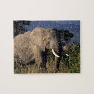 Kenya: Amboseli, male African elephant Puzzle