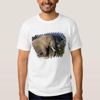 Kenya: Amboseli, male African elephant T-Shirt
