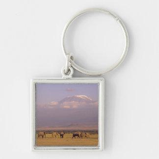 Kenya: Amboseli National Park, elephants and Keychain
