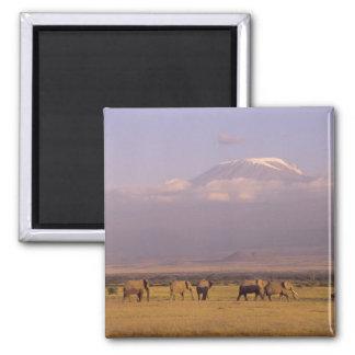 Kenya: Amboseli National Park, elephants and Magnet