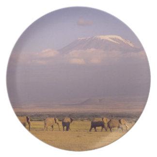 Kenya: Amboseli National Park, elephants and Melamine Plate