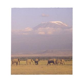 Kenya: Amboseli National Park, elephants and Notepad