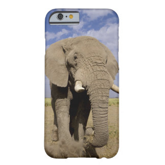Kenya: Amboseli National Park, male elephant Barely There iPhone 6 Case