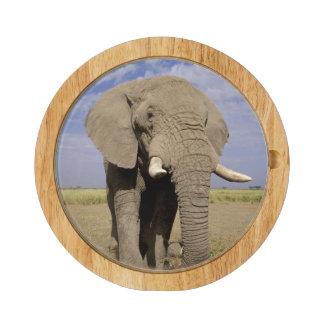 Kenya: Amboseli National Park, male elephant Cheese Board