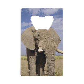 Kenya: Amboseli National Park, male elephant Credit Card Bottle Opener