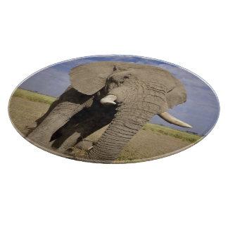 Kenya: Amboseli National Park, male elephant Cutting Board