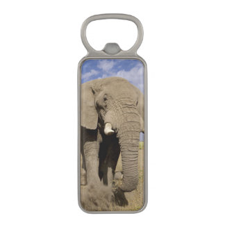 Kenya: Amboseli National Park, male elephant Magnetic Bottle Opener