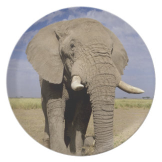 Kenya: Amboseli National Park, male elephant Melamine Plate
