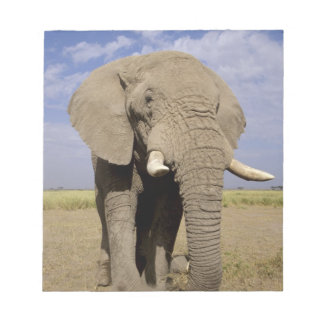 Kenya: Amboseli National Park, male elephant Notepad