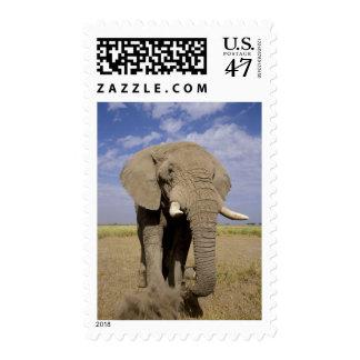 Kenya: Amboseli National Park, male elephant Postage Stamp