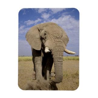 Kenya: Amboseli National Park, male elephant Rectangular Photo Magnet