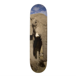 Kenya: Amboseli National Park, male elephant Skateboard