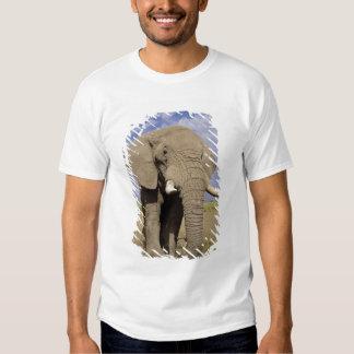 Kenya: Amboseli National Park, male elephant T-Shirt