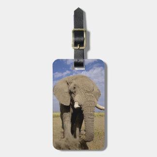 Kenya: Amboseli National Park, male elephant Tag For Luggage