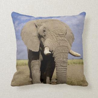 Kenya: Amboseli National Park, male elephant Throw Pillow