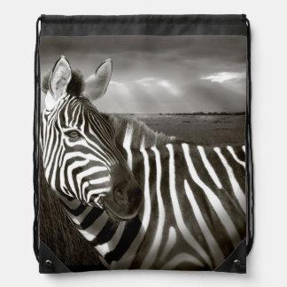 Kenya. Black & white of zebra and plain. Backpacks