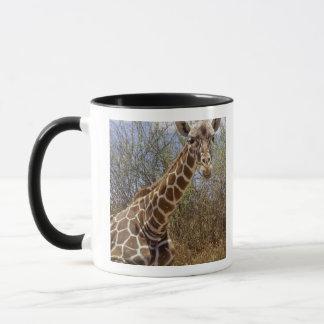 Kenya: Laikipia Plateau, Loisaba Wilderness Mug