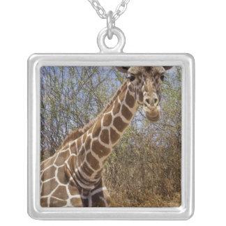Kenya: Laikipia Plateau, Loisaba Wilderness Silver Plated Necklace