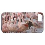 Kenya, Lake Nakuru National Park. Flamingos wade iPhone 5 Cover