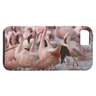 Kenya, Lake Nakuru National Park. Flamingos wade iPhone SE/5/5s Case