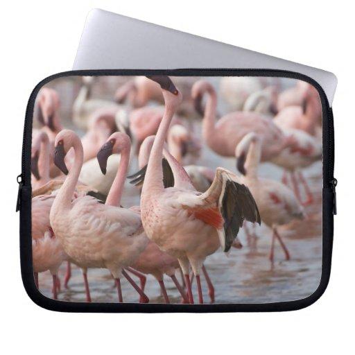Kenya, Lake Nakuru National Park. Flamingos wade Laptop Sleeves