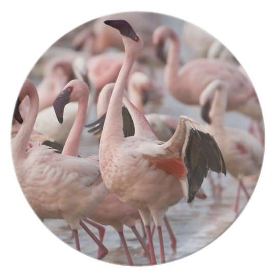 Kenya, Lake Nakuru National Park. Flamingos wade Melamine Plate
