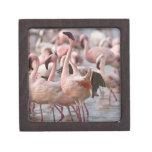 Kenya, Lake Nakuru National Park. Flamingos wade Premium Trinket Box