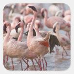 Kenya, Lake Nakuru National Park. Flamingos wade Sticker