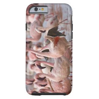 Kenya, Lake Nakuru National Park. Flamingos wade Tough iPhone 6 Case