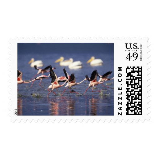 Kenya, Lake Nakuru National Park. Lesser Postage Stamps