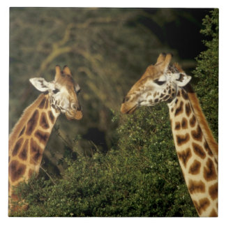 Kenya: Lake Nakuru National Park, Rothschild 2 Ceramic Tile