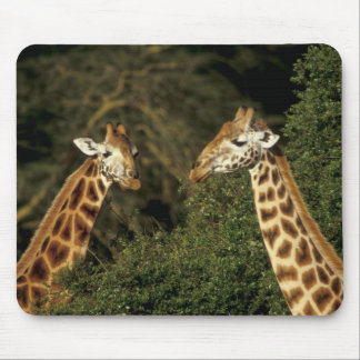 Kenya: Lake Nakuru National Park, Rothschild 2 Mouse Pad