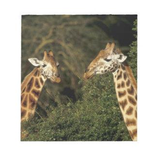 Kenya: Lake Nakuru National Park, Rothschild 2 Notepad