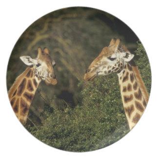 Kenya: Lake Nakuru National Park, Rothschild 2 Party Plate