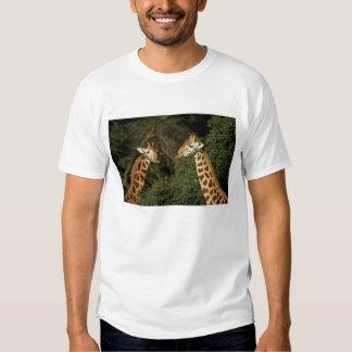 Kenya: Lake Nakuru National Park, Rothschild 2 T-Shirt